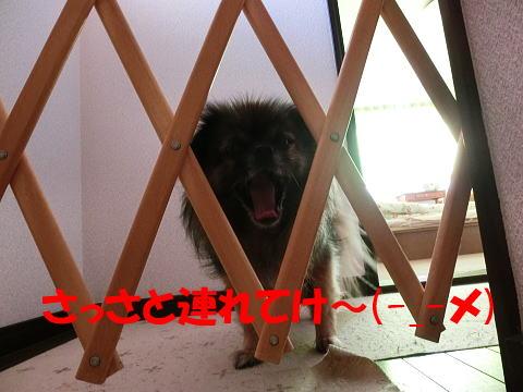 ACIMG0716.jpg