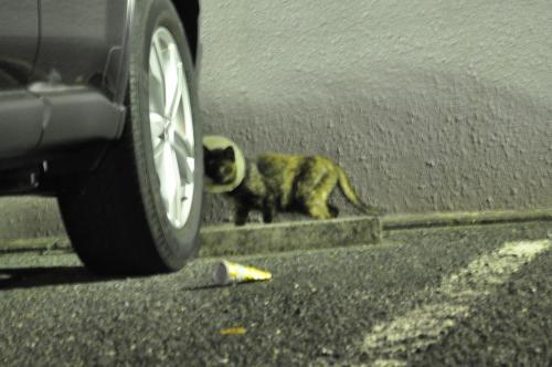 迷子カラー猫さん