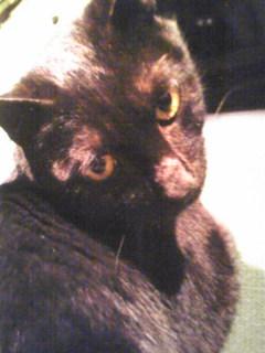 迷子猫『ジジ君』