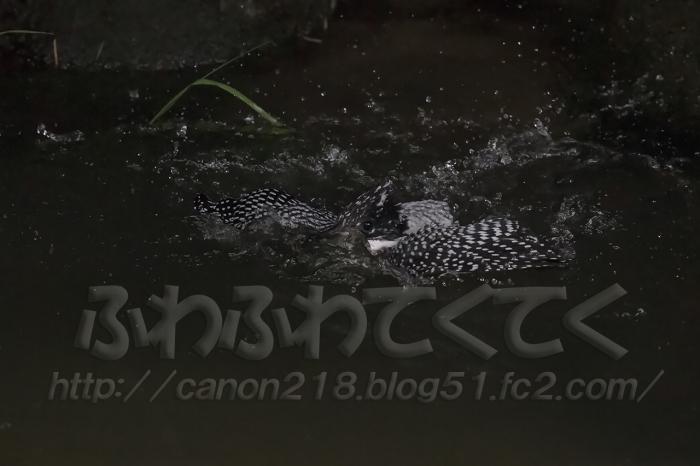 1DX_9121LR_1507.jpg