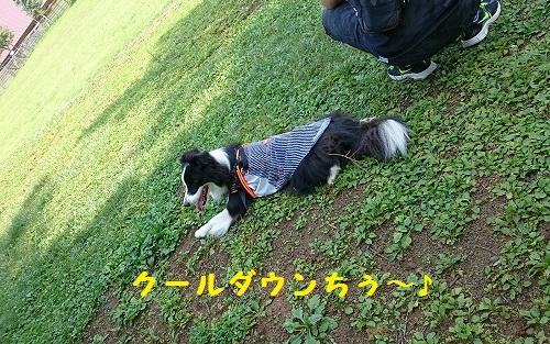 s-_20150802_195751.jpg