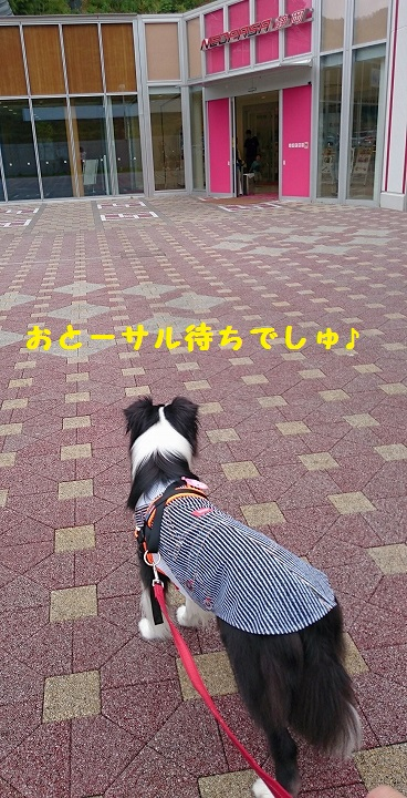 s-_20150813_203354.jpg