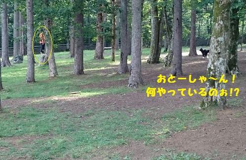 s-_20150817_144212.jpg