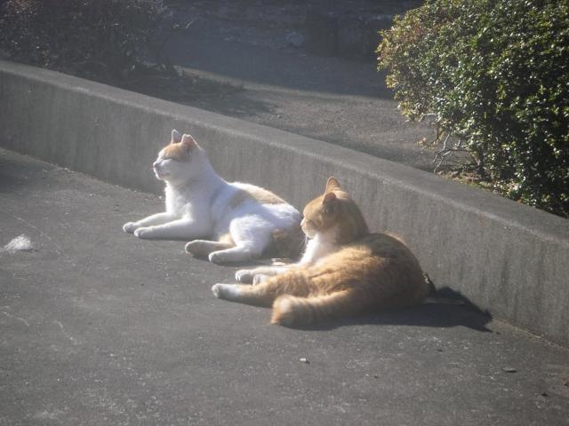 cat_20150127-2.jpg