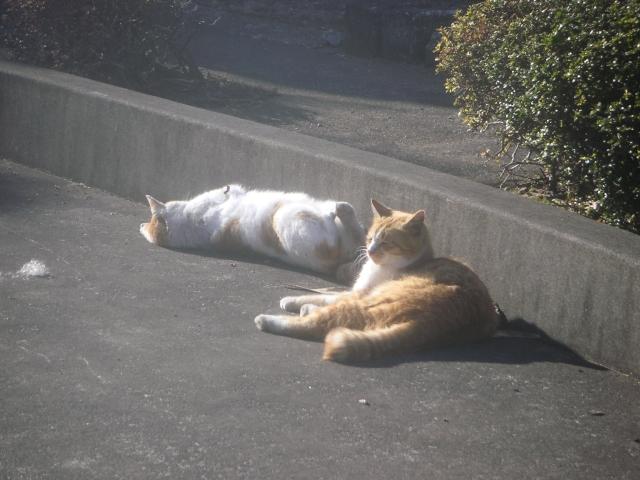 cat_20150127-3.jpg