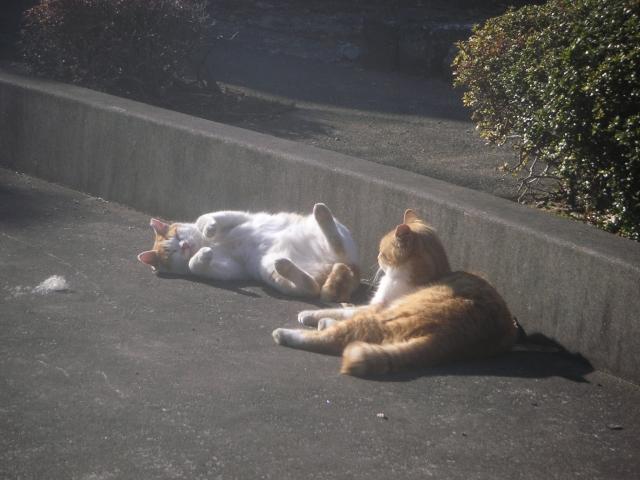 cat_20150127-5.jpg