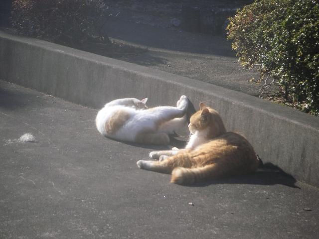 cat_20150127-6.jpg