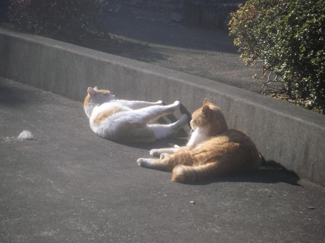 cat_20150127-7.jpg