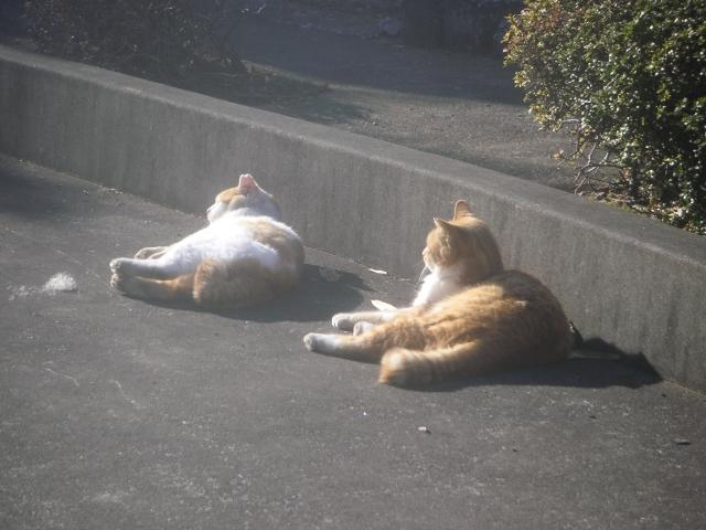cat_20150127-8.jpg