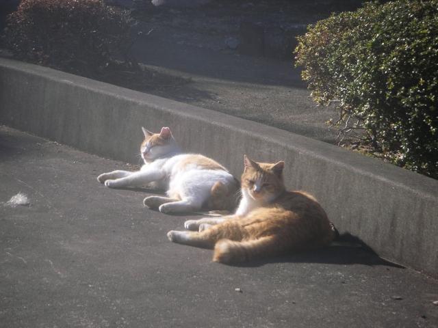 cat_20150127.jpg