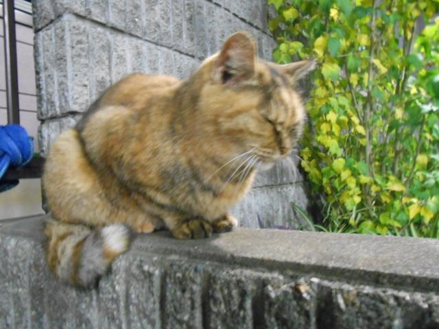cat_20150131.jpg