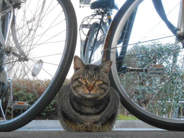 cat_222_1.jpg
