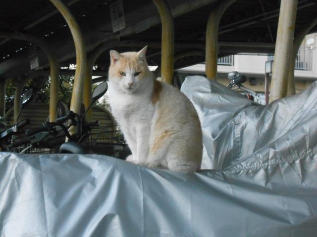 cat_222_2.jpg