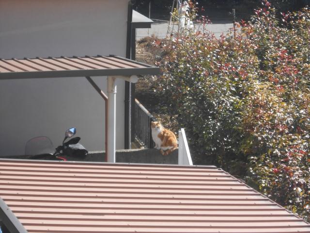 cat_222_3.jpg