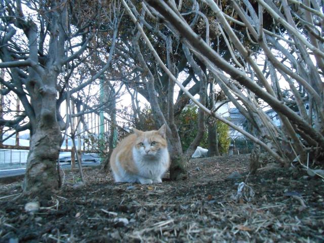 cat_222_4.jpg