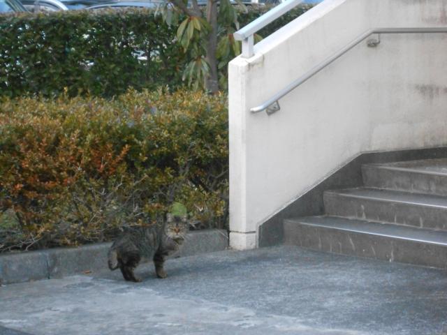 cat_222_5.jpg