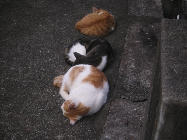 cat_maru3.jpg