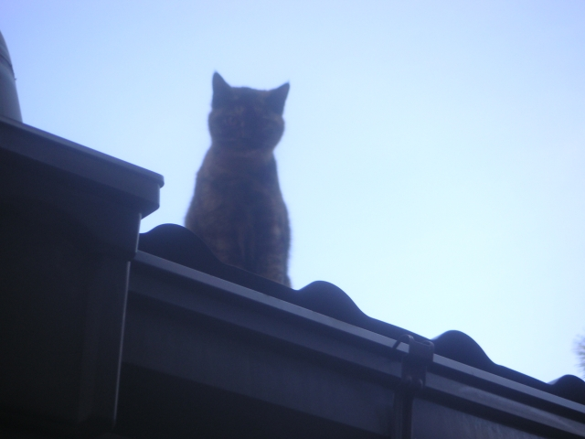cat_yane_02.jpg