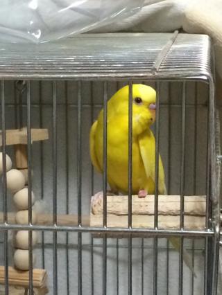 lemon4