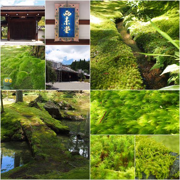 ゆうブログケロブログ京都2015 (33)
