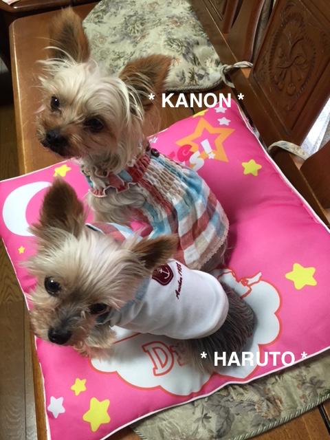 カノン&ハルト2