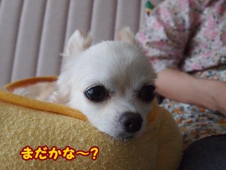blog6557a.jpg