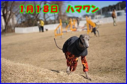 DSC_1000_201501202358473de.jpg