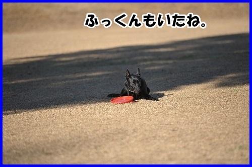 DSC_4895_20150107000103d0e.jpg