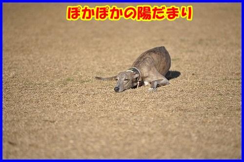 DSC_4898.jpg