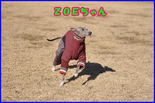DSC_4909.jpg