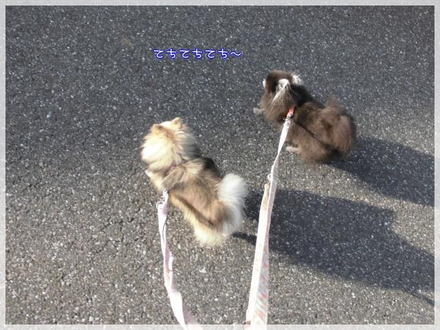 朝んぽ1 15-08