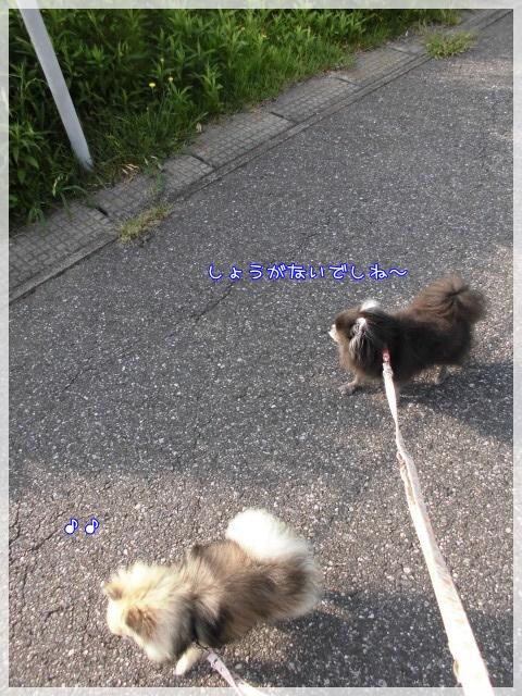 朝んぽ7 15-08