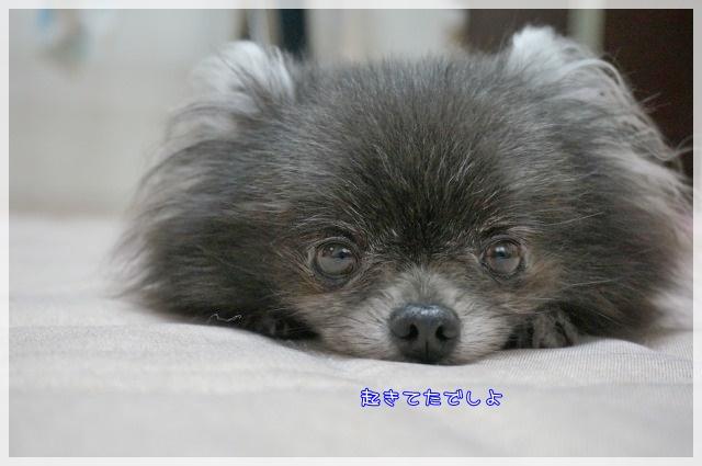 ぺったんこ8 15-08