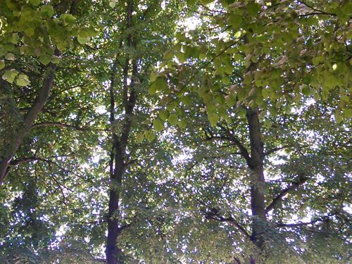 versailles jardin arbres