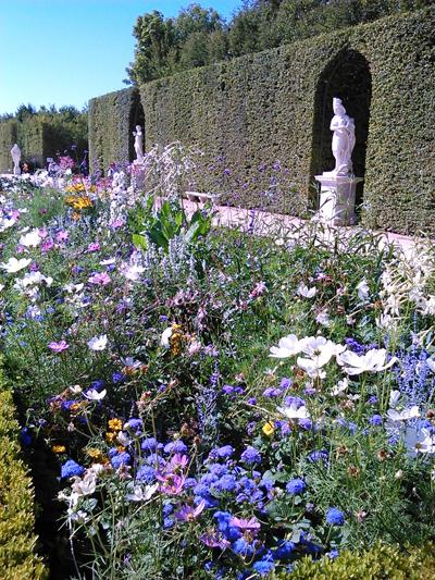 versailles fleurs