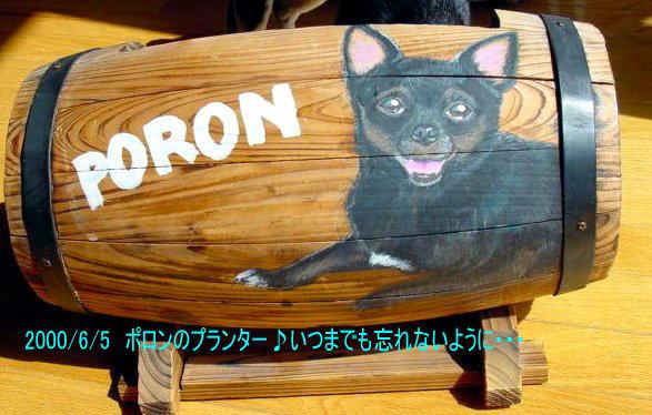ポロン 1