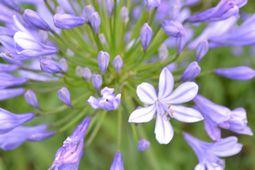 022紫花