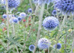 005青紫