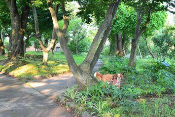 002バラ公園