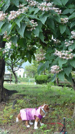 011バラ公園
