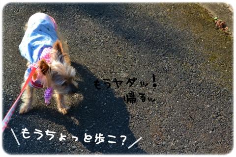 朝顔 (1)