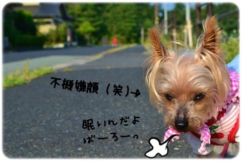 朝顔 (2)