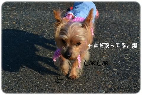 朝顔 (3)