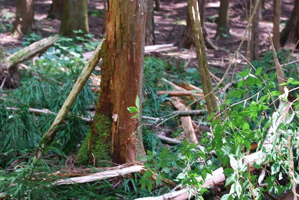 散らばった木材