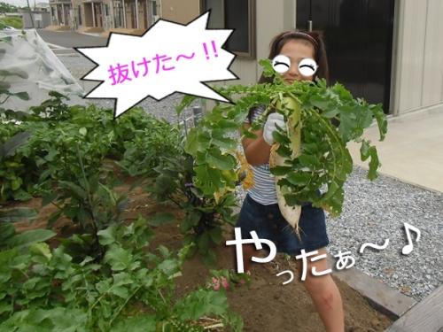 2015大根②