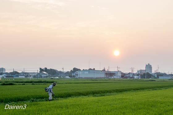 早朝の草刈り