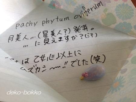 月美人 葉挿しチャーム 201502