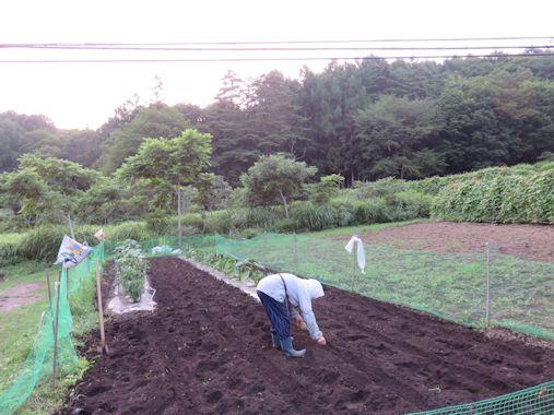 夕暮れ時の  農作業