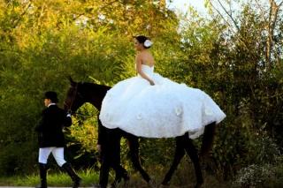 結婚式_画像_ペット_馬