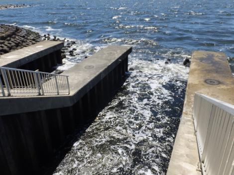 柳島管理センター・放流渠出口放流水